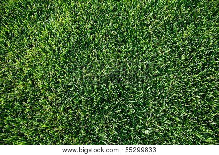 Close up shot of fresh spring geen grass.