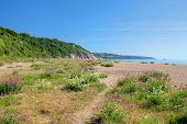 foto of devonshire  - Pretty wild flowers on Slapton Sands at springtime - JPG