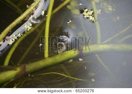 Snail under water