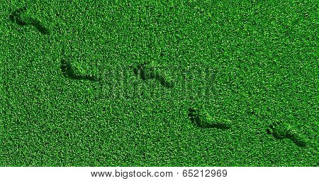 Footprints On The Grass