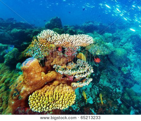 Beautiful marine life, amazing colorful coral garden and many little fishes, beauty of exotic nature, tropical vacation concept