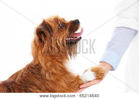 A picture of a dog with hurt paw giving thanks to the vet