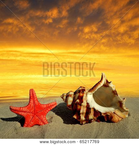 Conch shell with starfish on beach in the sunset