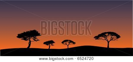 Savanna's landscape in evening