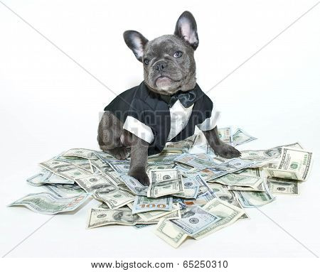 Rich Frenchbulldog