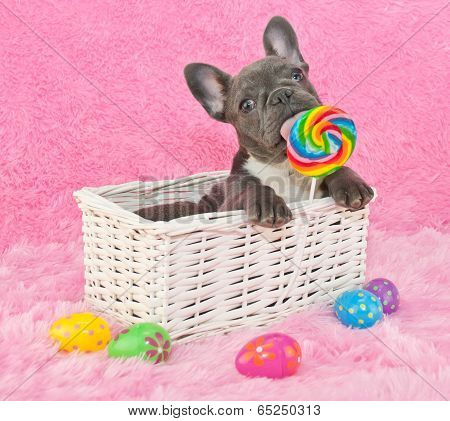 Easter Puppy