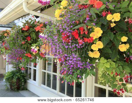 Blooming Flowers Decorate Esterior