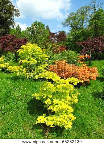 Rural Garden Landscape