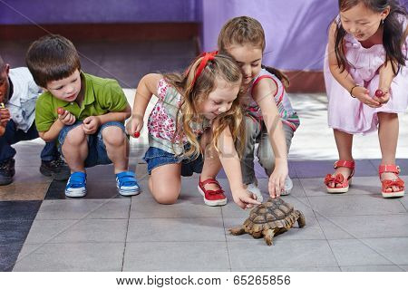 Many happy children petting a turtle in a kindergarten playground