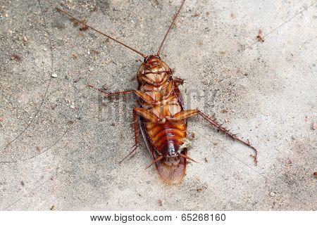 Dead Of Cockroach.