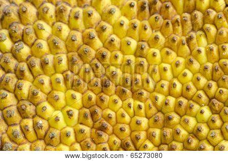 Close up of Jack fruit skin texture