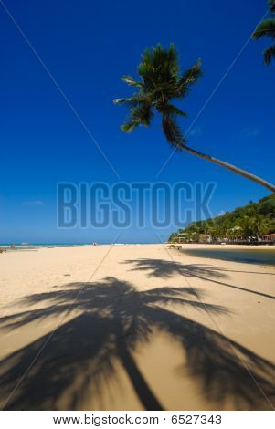 Beautiful Beach At Praia Da Pipa Brazil