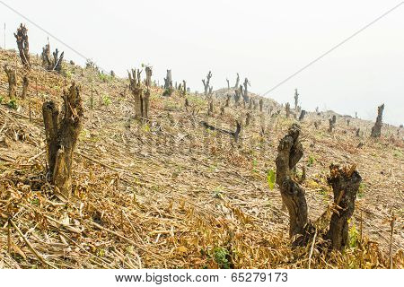 Slash And Burn Cultivation