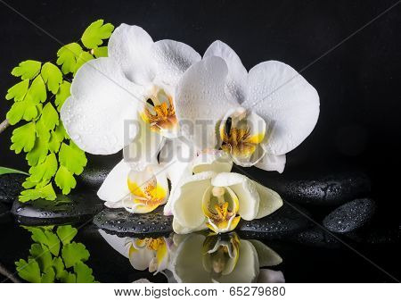 Beautiful Spa Setting Of White Orchid (phalaenopsis), Green Branch Of Fern, Zen Stones With Drops An