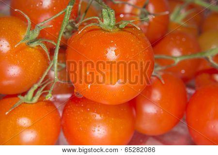 Very Fresh Cherry Tomatoes