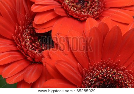 Close-up Of Red Heart Of Flower And Petals