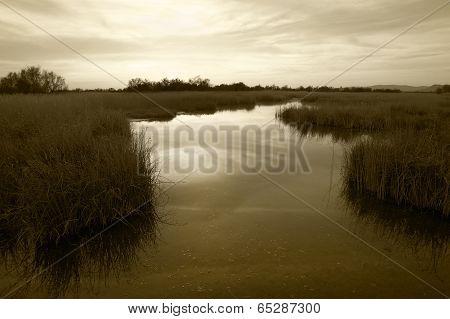 Wetland Landscape. Sepia Tone. Tablas De Daimiel. Ciudad Real. Spain.