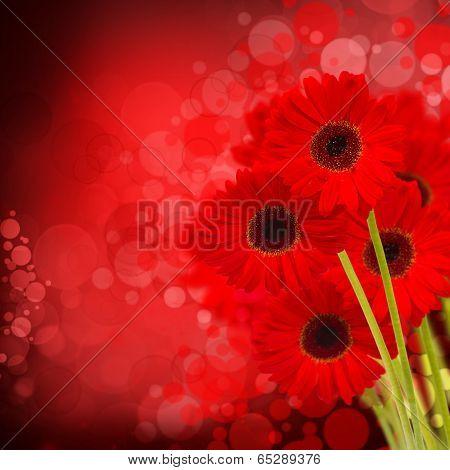 red gerbera flowers