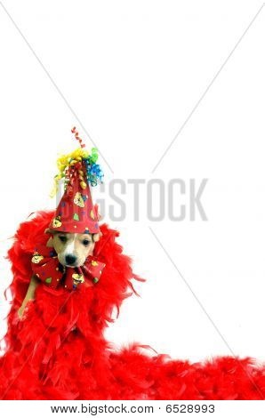 Animal Celebrating