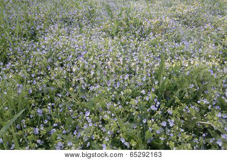 flowers on a grass