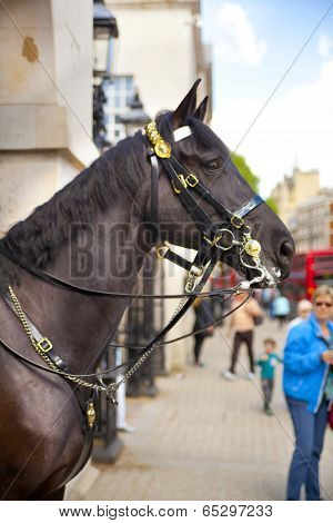 LONDON, UK - MAY 14, 2014  -  Members of the Queen s Horse Guard on duty  Horse Guards Parade, Londo