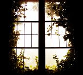 stock photo of ivy vine  - window covered with ivy - JPG