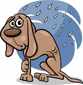 image of emaciated  - Cartoon Illustration of Poor Homeless Dog in the Rain - JPG