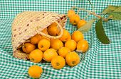 image of loquat  - A small basket full of freshly harvested loquats