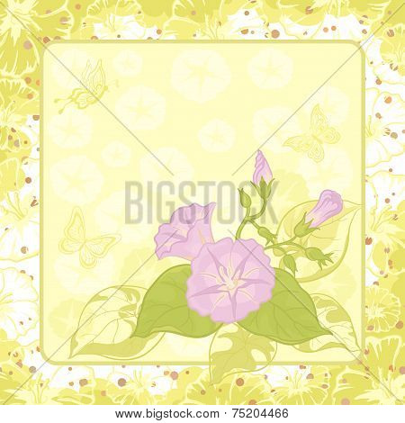 Floral background, Ipomoea