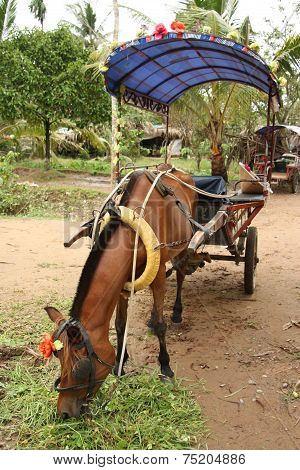 Horse with a vintage cart