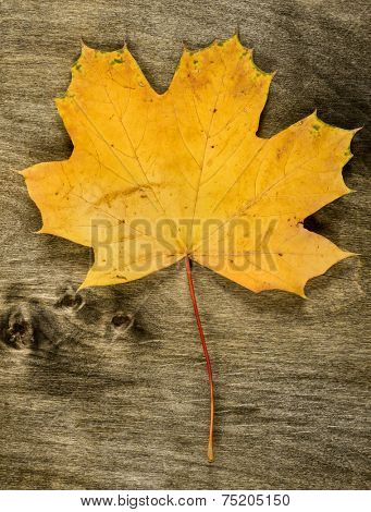 one yellow maple leaf on wooden background