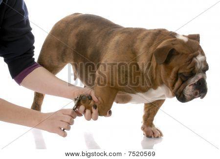 Cutting A Dog Toenails