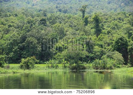 Water, Forest Canopy.