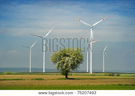 Wind farm and tree.