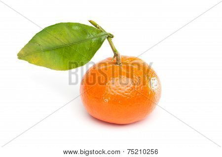 Mandarin (tangerine) With Leaf