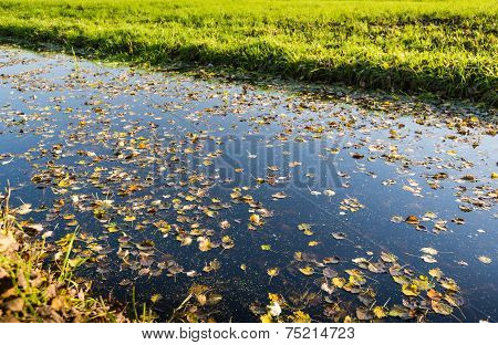 Fallen Leaves Floating On A Stream