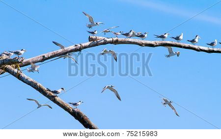 Seagulls resting on a wooden stick
