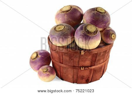 Vegetable Turnip Roots