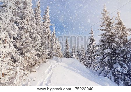 Winter landscape with snow drifts and a footpath in a mountain forest. Forest after a snow storm