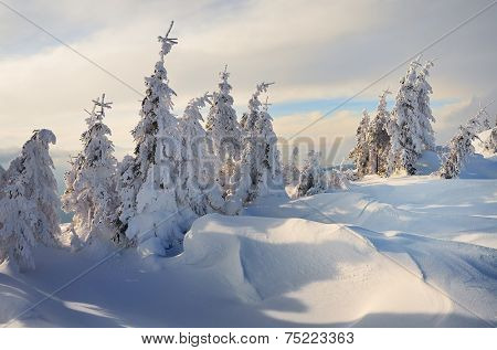 Christmas landscape. Winter forest in mountains. Fir under the snow. Beautiful snowdrifts