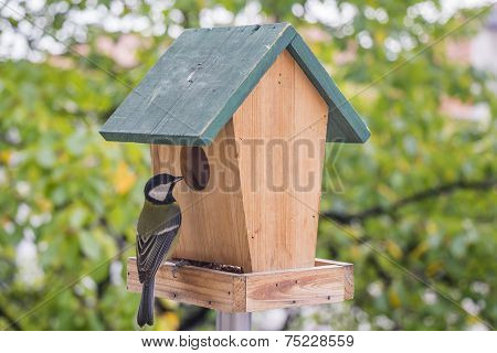 Birds Titmouse