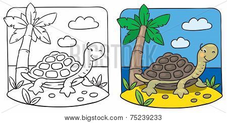 Little Turtle Coloring Book