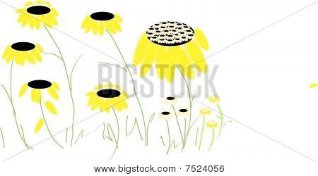 isolated black eyed susan vector