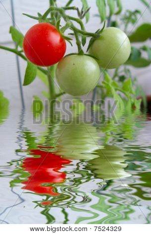 Stock Image Of Cherry Tomatoes