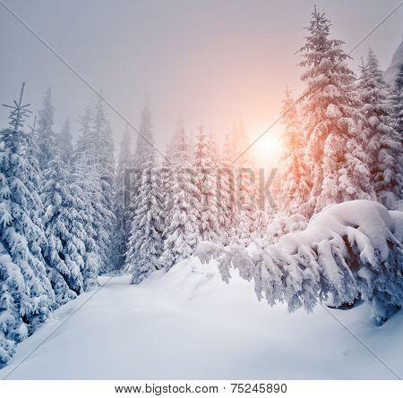 Fantastic landscape glowing by sunlight. Dramatic wintry scene. Carpathian, Ukraine, Europe. Beauty world.