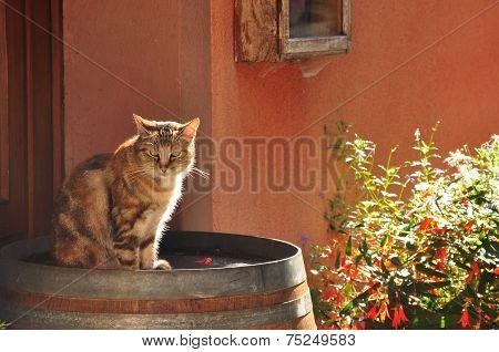 Backlit Cat