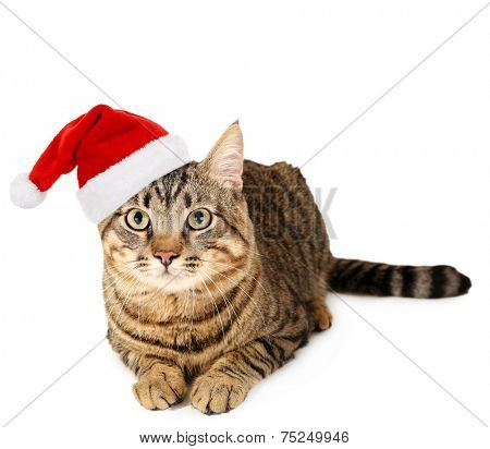 Cat in Santa Claus hat isolated on white