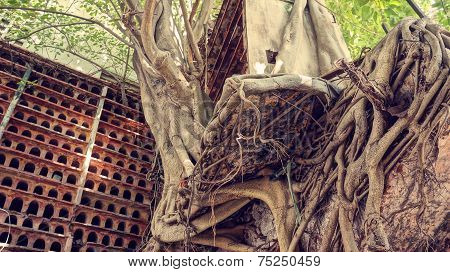 Abstract Background, Tree Trunk, Root, Red Nest