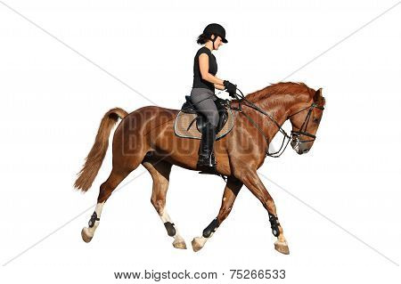 Beautiful Brunette Woman Trotting With Chestnut Horse Isolated On White