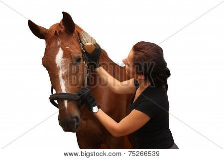 Brunette Woman Grooming Brown Horse For The Riding Isolated On White